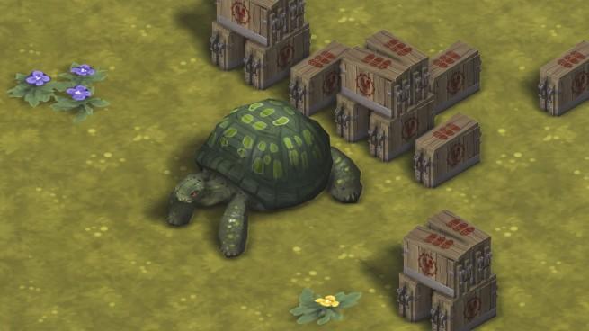 Tortoise Ammo 1